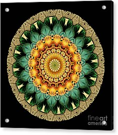 Kaleidoscope From Old Entomology Illustration Of Butterflies Acrylic Print by Amy Cicconi