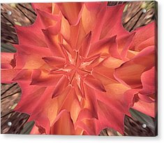 Acrylic Print featuring the photograph Kaleidoscope Rose by Michele Kaiser