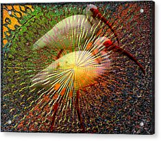 Kalidescope Of Ibis Acrylic Print by Irma BACKELANT GALLERIES