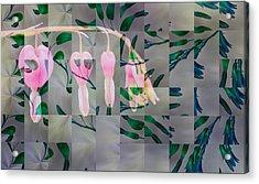 Kaliedaheart Acrylic Print