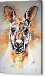 Kangaroo Big Red Acrylic Print