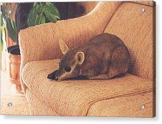 Kangaroo Buddy Sculpture Acrylic Print by Arlene Delahenty