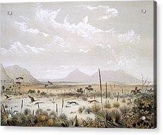 Kangaroo Hunting Near Port Lincoln Acrylic Print by George French Angas