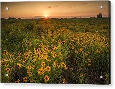 Kansas Wildflowers Acrylic Print