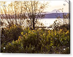 Acrylic Print featuring the photograph Karel's View by Jan Davies