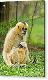 Karmic Bond Acrylic Print by Ashley Vincent