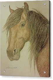 Kathy's Horse Acrylic Print by Christy Saunders Church