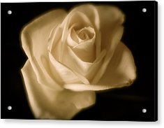 Katie's White Rose Acrylic Print by Teresa Tilley