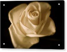 Katie's White Rose Acrylic Print