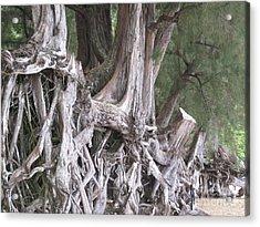 Kauai - Roots Acrylic Print