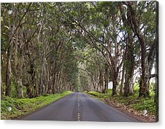 Kauai Tree Tunnel Road Acrylic Print