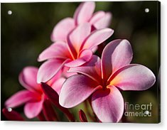 Kaupo Summer Treasure Acrylic Print by Sharon Mau