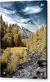 Kautz Creek Acrylic Print by David Stine
