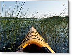 Kayaking Through Reeds Bwca Acrylic Print by Steve Gadomski