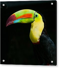 Acrylic Print featuring the photograph Keel-billed Toucan by Avian Resources