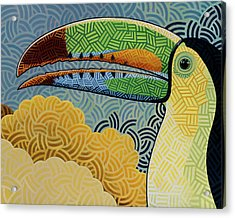 Keel-billed Toucan Acrylic Print by Nathan Miller