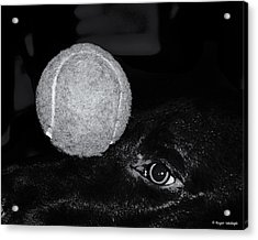 Keep Your Eye On The Ball Acrylic Print by Roger Wedegis