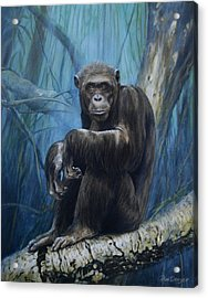 Keeper Of The Congo Acrylic Print by Dreyer Wildlife Print Collections