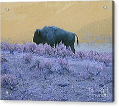 Keeper Of The Prairie Acrylic Print by Ann Johndro-Collins