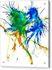 Kelpie 4 Acrylic Print