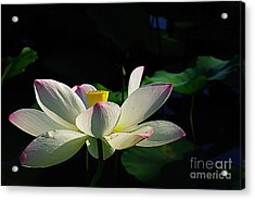 Acrylic Print featuring the photograph Kenilworth Garden Two by John S