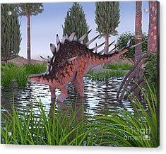Kentrosaurus Acrylic Print