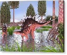 Kentrosaurus Pair In Water Acrylic Print