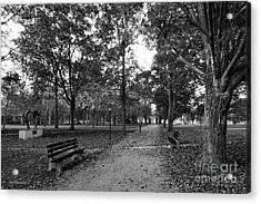 Kenyon College Middle Path Acrylic Print by University Icons