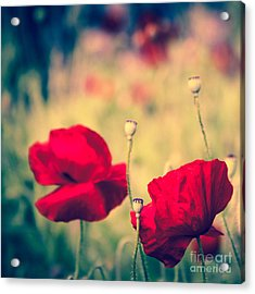Keokea Poppy Dreams Acrylic Print by Sharon Mau