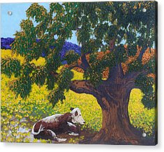 Kern County Cow Acrylic Print