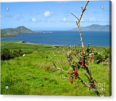 Acrylic Print featuring the photograph Kerry Me Away by Suzanne Oesterling