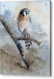 Acrylic Print featuring the painting Kestrel Perch by Mary McCullah