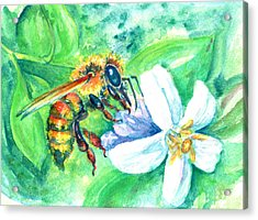 Key Lime Honeybee Acrylic Print