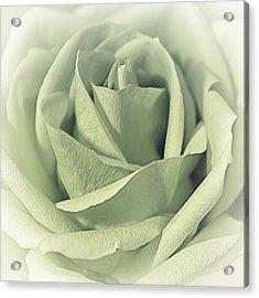 Key Lime Souffle Acrylic Print