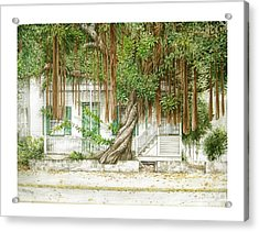 Key West Banyan Acrylic Print