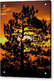 Keystone Pine Acrylic Print