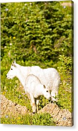Kids In Glacier 4 Acrylic Print by Natural Focal Point Photography