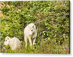 Kids In Glacier Np 3 Acrylic Print by Natural Focal Point Photography