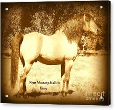 Kiger Mustang Stallion King Sepia Acrylic Print by Jodie  Scheller