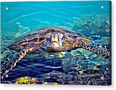 Kiholo Turtle Acrylic Print by Bob Kinnison