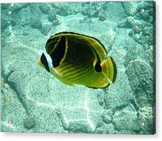 Kikapapu Fish Acrylic Print by Karen Nicholson