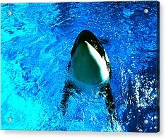 Killer Whale Greeting Acrylic Print by Robert  Rodvik