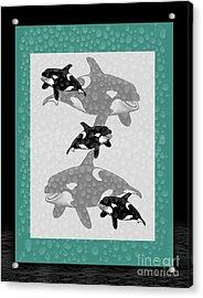 Killer Whales Acrylic Print