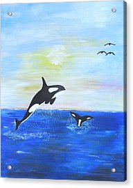 Killer Whales Leaping Acrylic Print