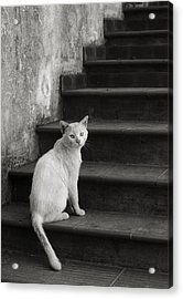 Acrylic Print featuring the photograph Kimba by Laura Melis