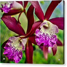 Kimball Orchids Acrylic Print