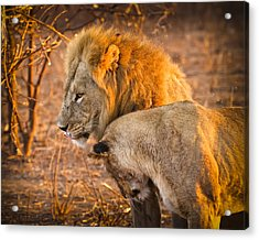 King And Queen Acrylic Print by Adam Romanowicz