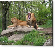 King And Queen Of The Jungle Acrylic Print
