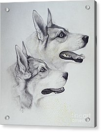 King Dogs Acrylic Print by Joey Nash