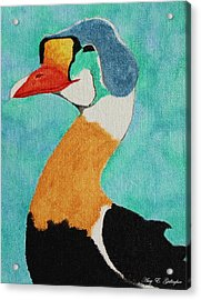King Eider Acrylic Print by Amy Gallagher